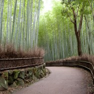 Arashiyama's bamboo groves, Kyoto, Japan | © Marijn Engels, October 2012