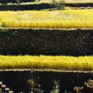 Rice fields, Shikoku, Japan | © Marijn Engels, September 2012